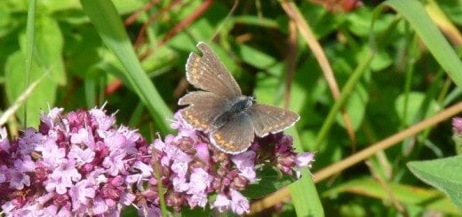 Tatty Northern Brown