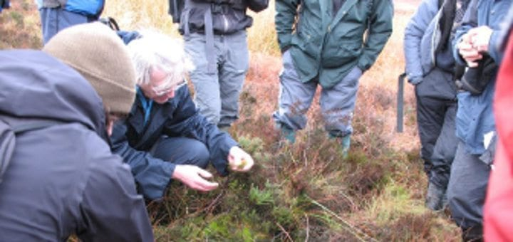 Sphagnum Mosses: An Introduction to Identification and Species Diversity