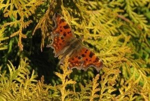 Comma, Dave Howson 14/03/2016